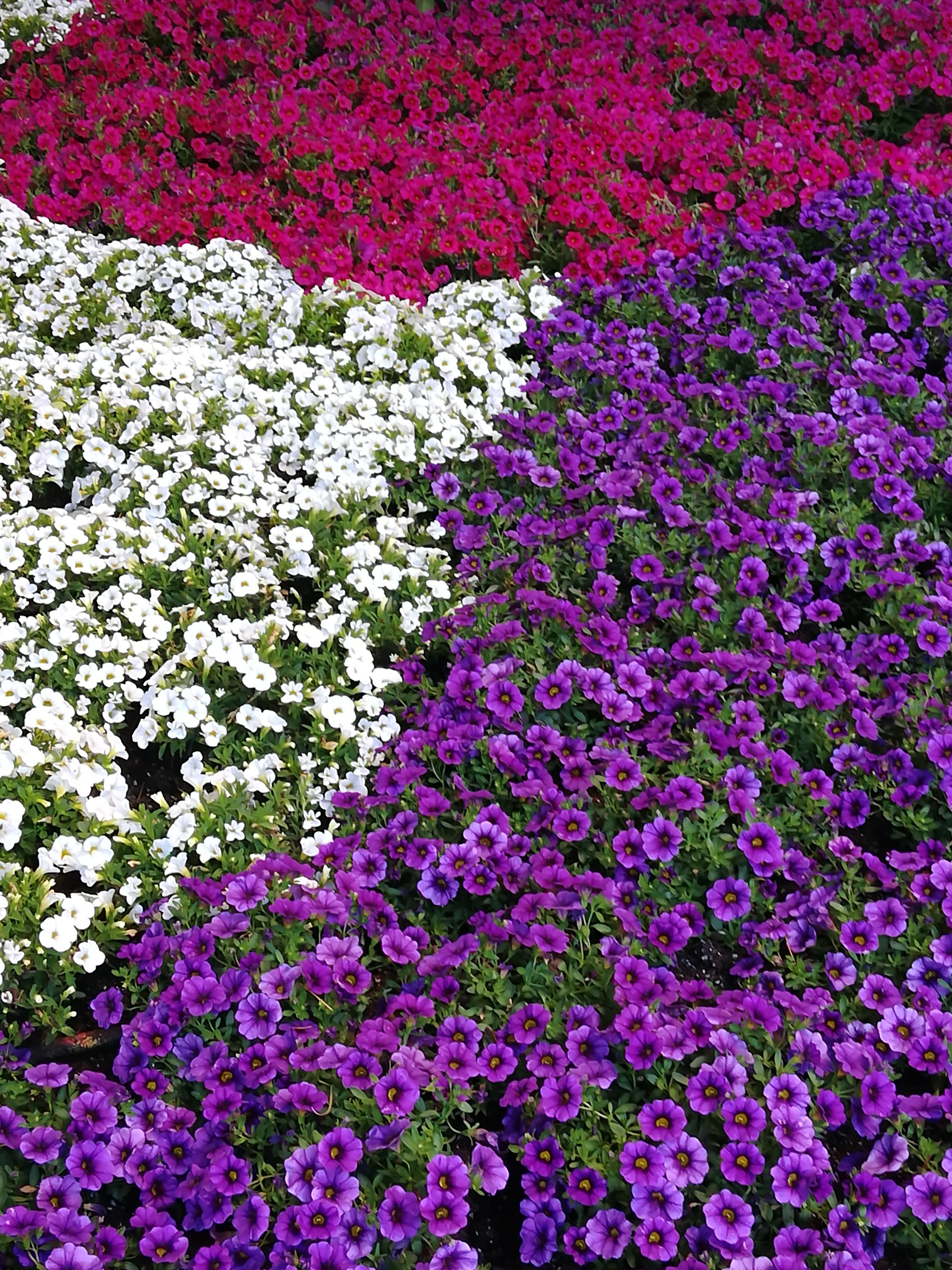fiori giardini padova